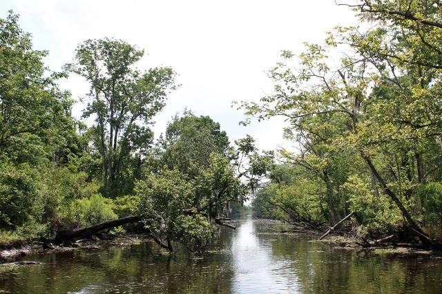 Cajun Pride Swamp Tours Groupon