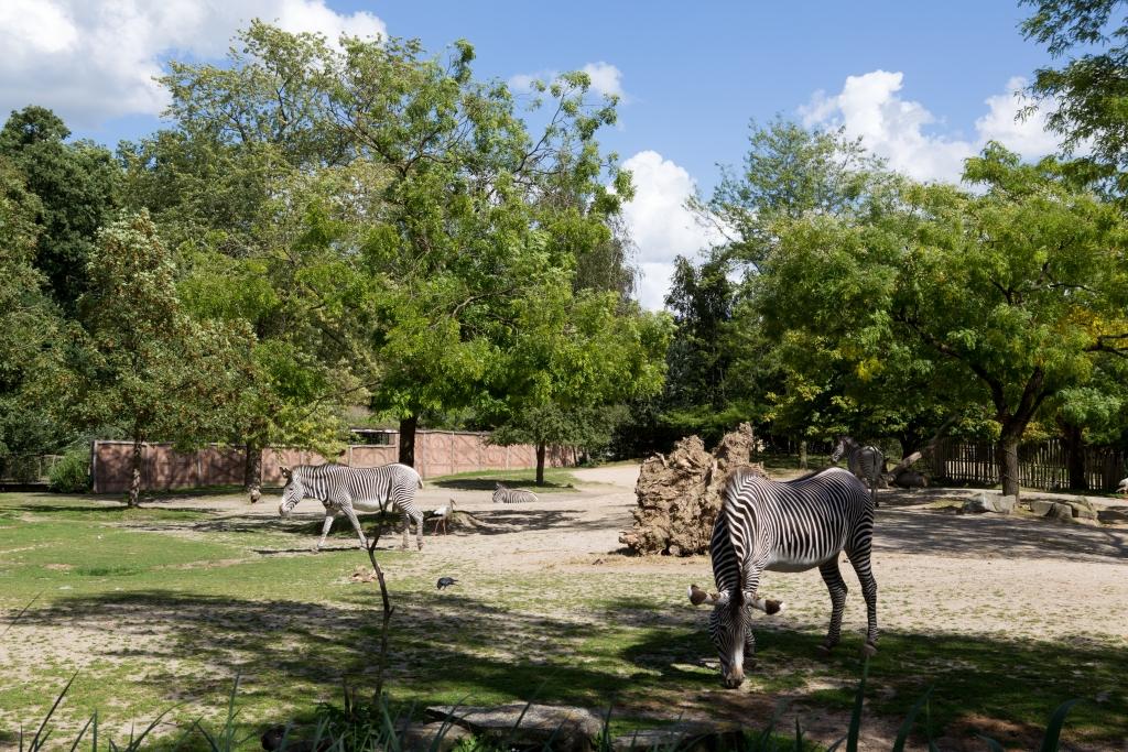 Bits en bites van Carolien Zebra